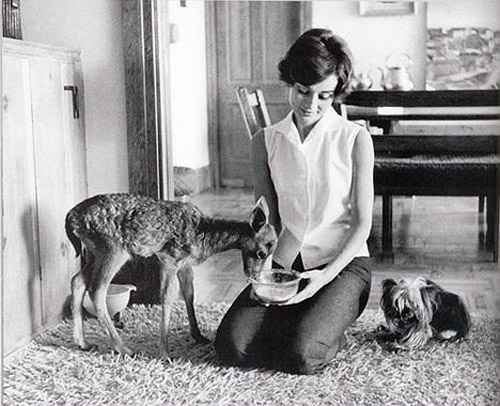 Audrey-Hepburn-and-her-little-pet-fawn-Pippin-and-yorkshire-Mrs.-Famous