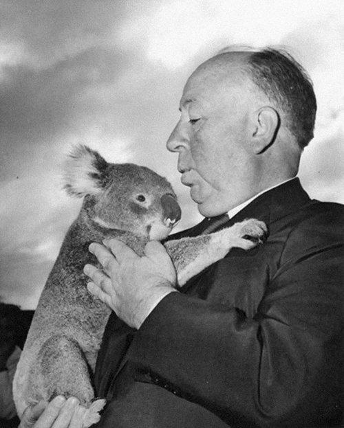 Alfred-Hitchcock-panda-animal