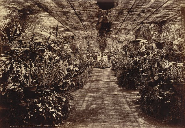 Orchid-House-at-Botanical-Gardens-Calcutta-Kolkata-1890s