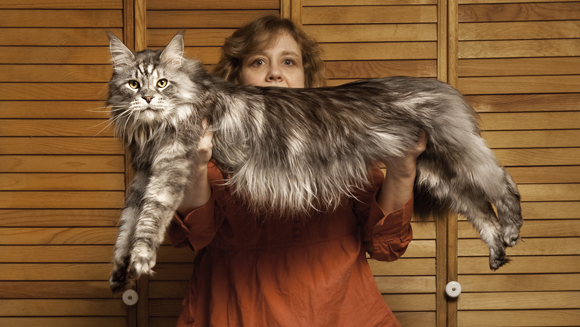 Stewie-Longest-Cat-with-his-owner