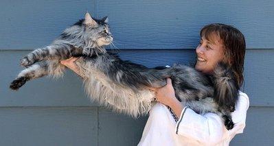 Stewie-Longest-cat-in-worlds
