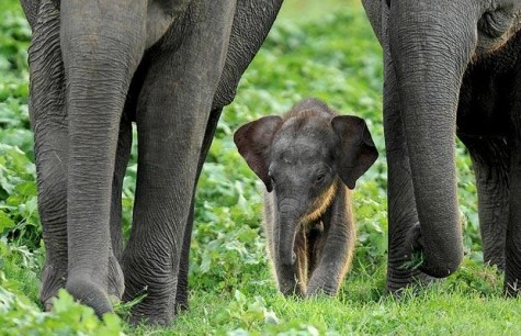 baby-elephant-with-his-family