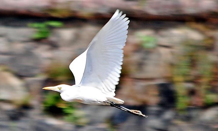 beautiful-photo-of-crane