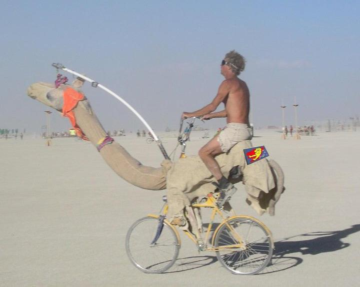 camel-ride-in-a-bicycle