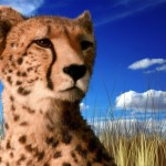 cheetah-under-blue-sky