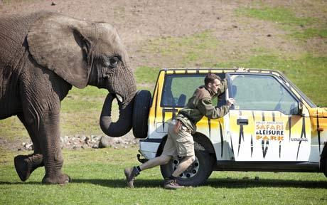 elephant-attack-safari-car