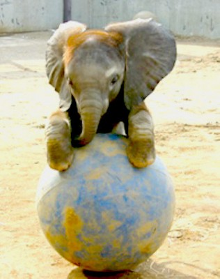 elephant-play-with-globe
