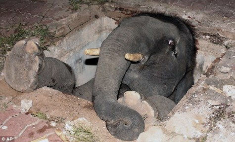 elephant-trapped-in-a-hole