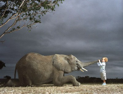 elephant-trunk-and-a-cute-baby-play-with-it
