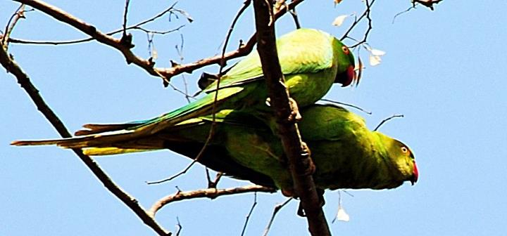 love bird taken in himalyan region