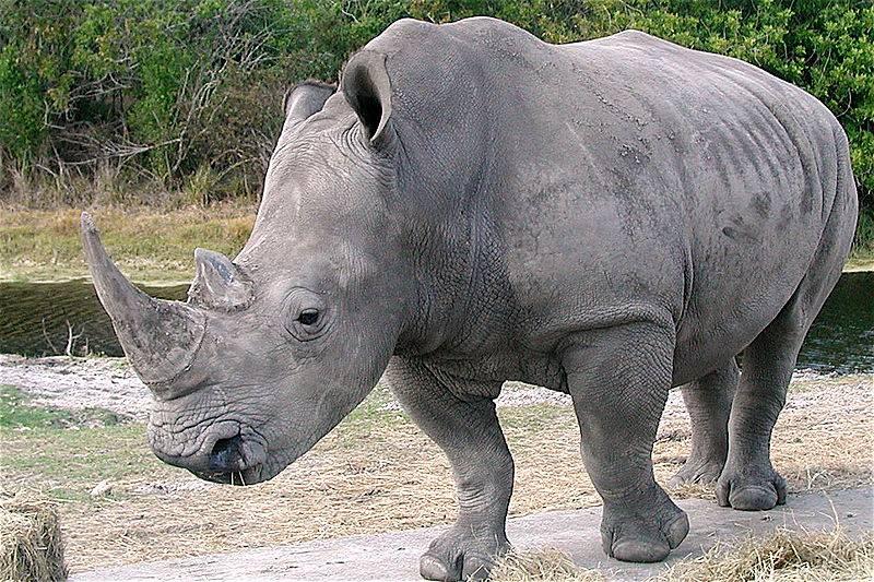 rhino-horn-made-of-hair