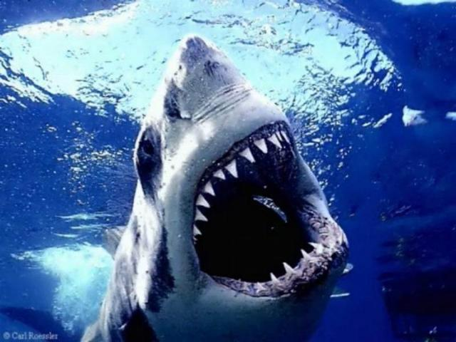 shark-live-100years-weird-facts