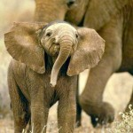 Elephant– some cute photos