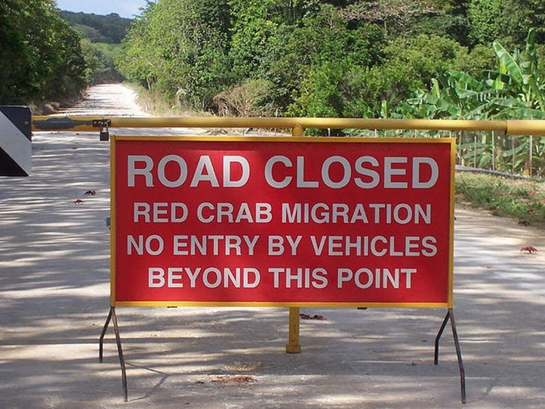 road-closed-for-red-crab-migration