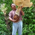 world's-biggest-mushroom-mexico