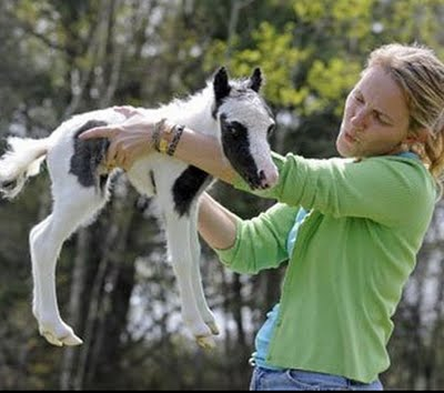 the smallest in the world horse  Einstein – the smallest horse