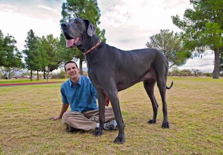 george-biggest-dog-in-us-world-records