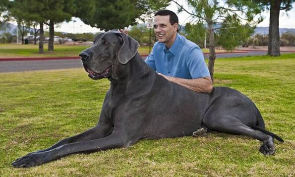 george-biggest-dog-in-world