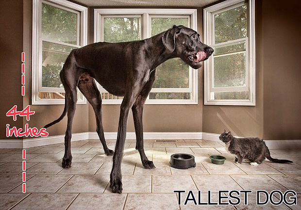 tallest-dog-in-world-zeus