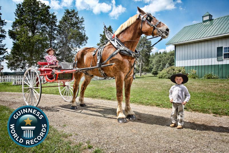 Big-Jake-Tallest-Horse-2012