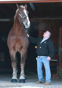 big-jake-tallest-horse-guinness-world-records