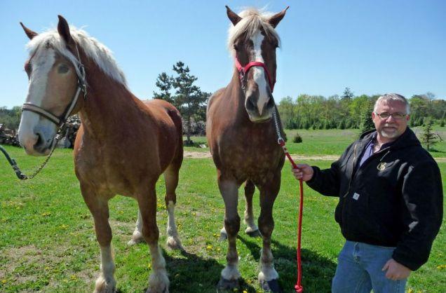 big-jake-tallest-horse-in-world