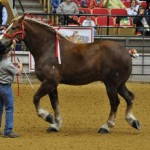 big-jake-world-largest-horse-for-2010-2011-2012