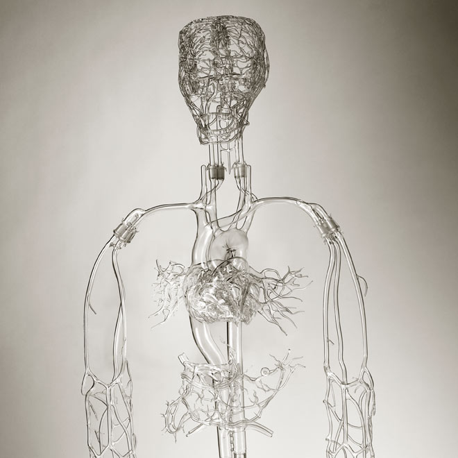 glass-made-blood-supply-human-body