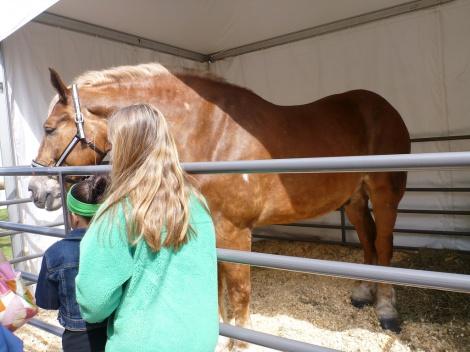 mid-west-horse-fair