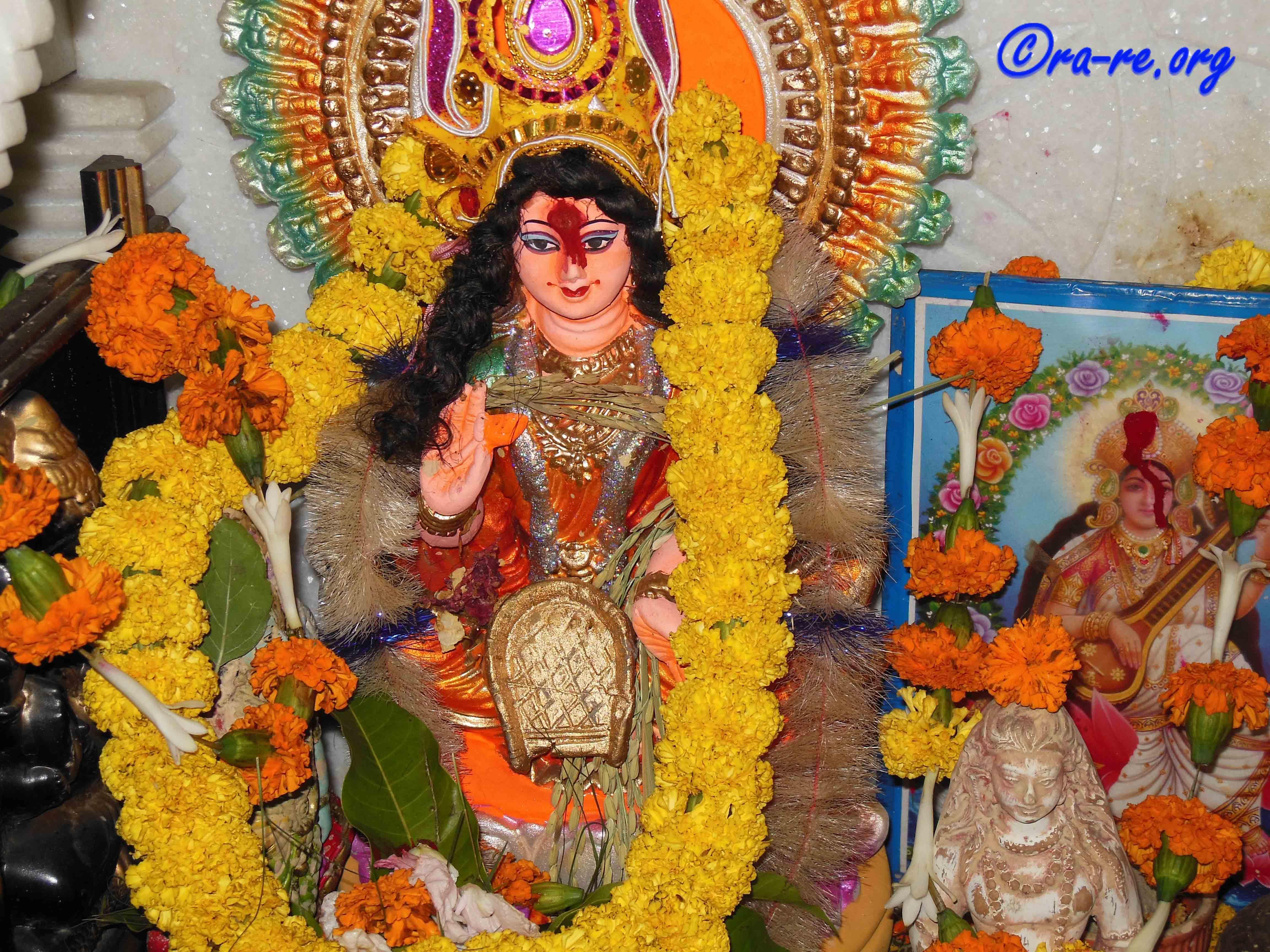 maa-lakshmi-pinwheel-flower-used-to-worship-her