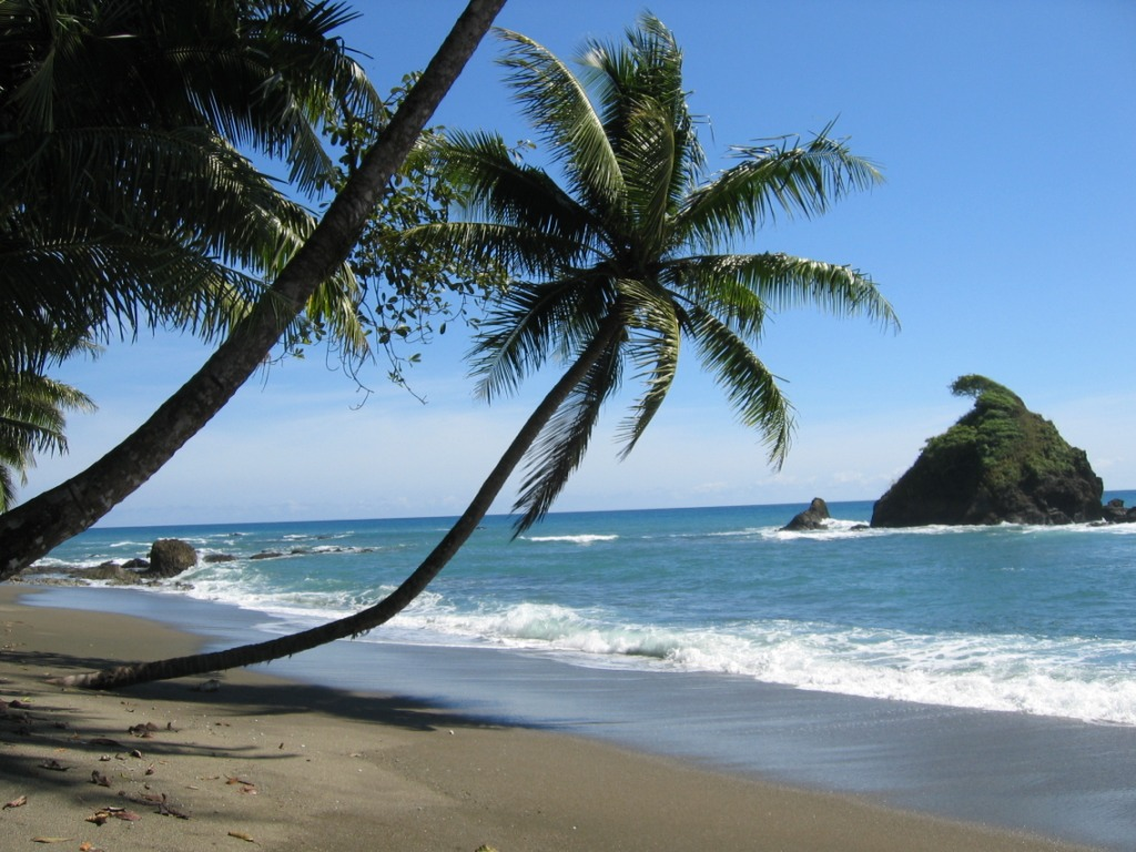 coconut-tree-in-sea-beach-extremely-beautiful-scenes