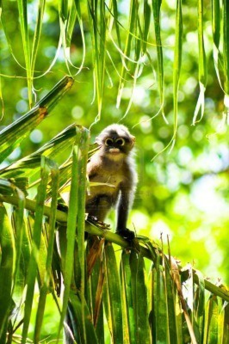 langur-baby-over-a-coconut-tree