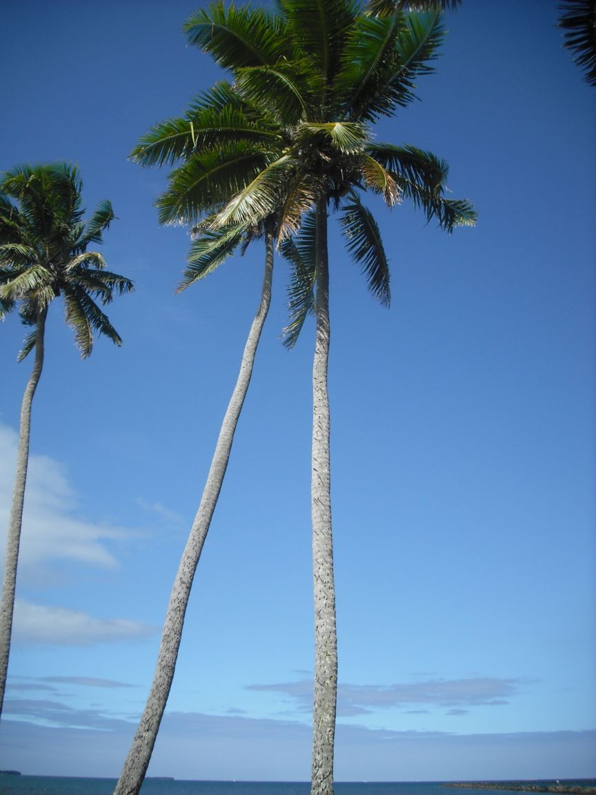 relaxing-beach-and-coconut-tree-makes-travel-awesome