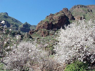 almond-tree-in-hilly-region