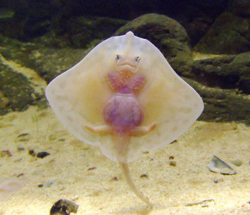 baby-stingrays-they-are-vulnerable