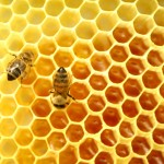 Honey Is The Only Food That May Remain Edible Even After 3000 yrs
