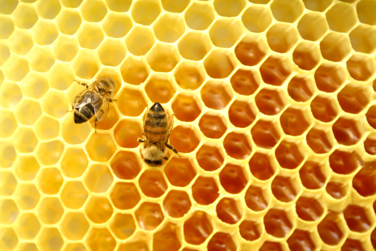bees-are-busy-to-build-honeycomb