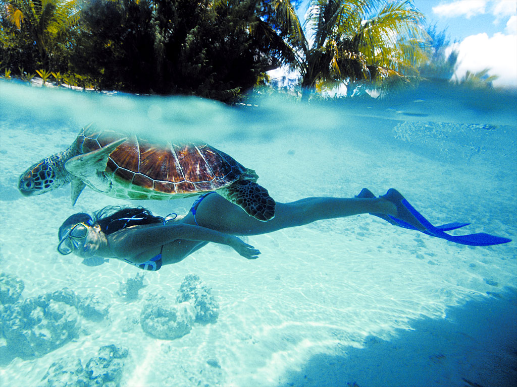 Bora-bora-diving-in-clean-water-diving-with-tortoise