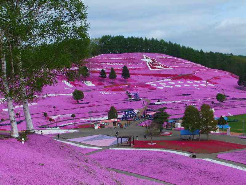 Higashimokoto-Flower-Park-pink-colour-awesome-during-spring