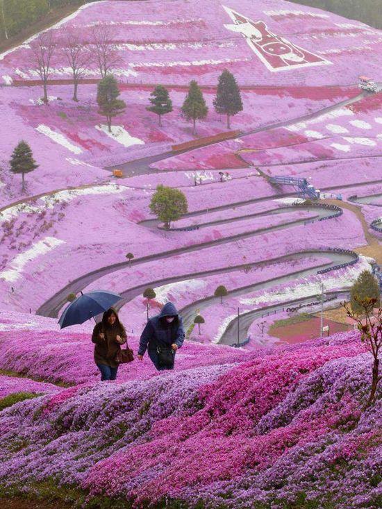 Higashimokoto-Flower-Park-two-visitors-walks
