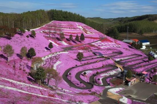 Higashimokoto-Flower-Park