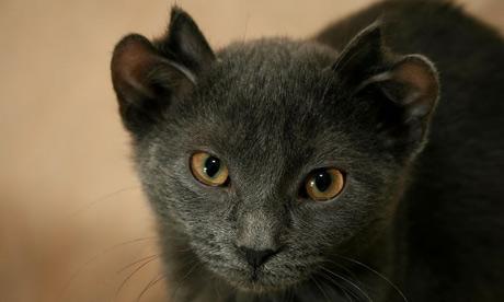 cat-yoda-is-unique