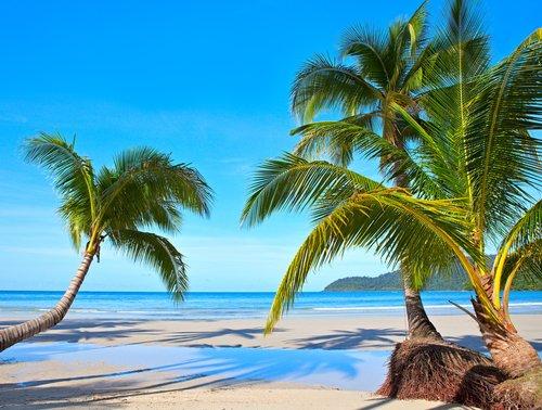 coconut-tree-in-solomon-islands