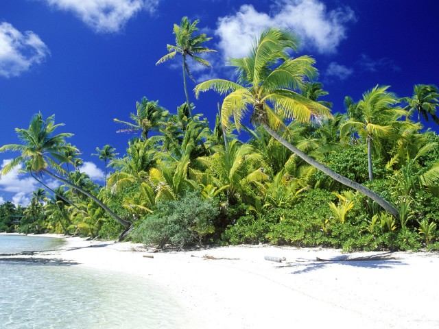 palm-beach-in-solomon-islands