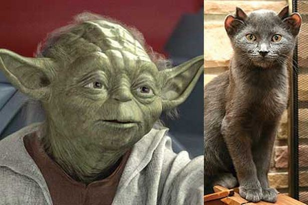 yoda-named-as-star-war-character-Yoda