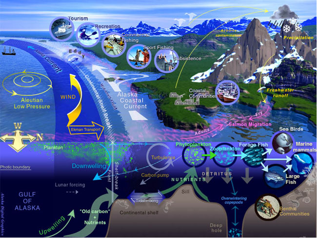 gulf-of-alaska-eco-system