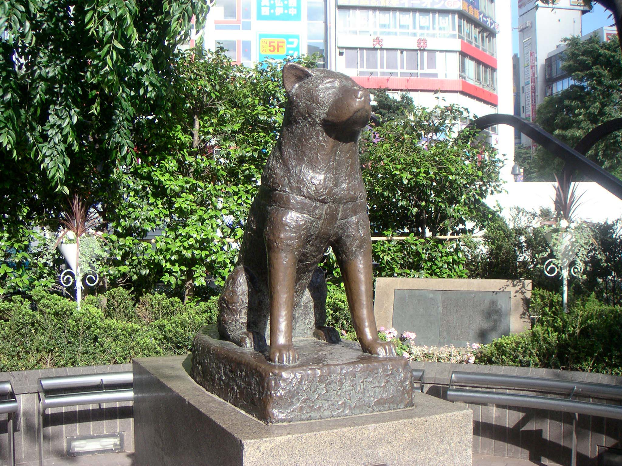 hachiko-statue-from-front