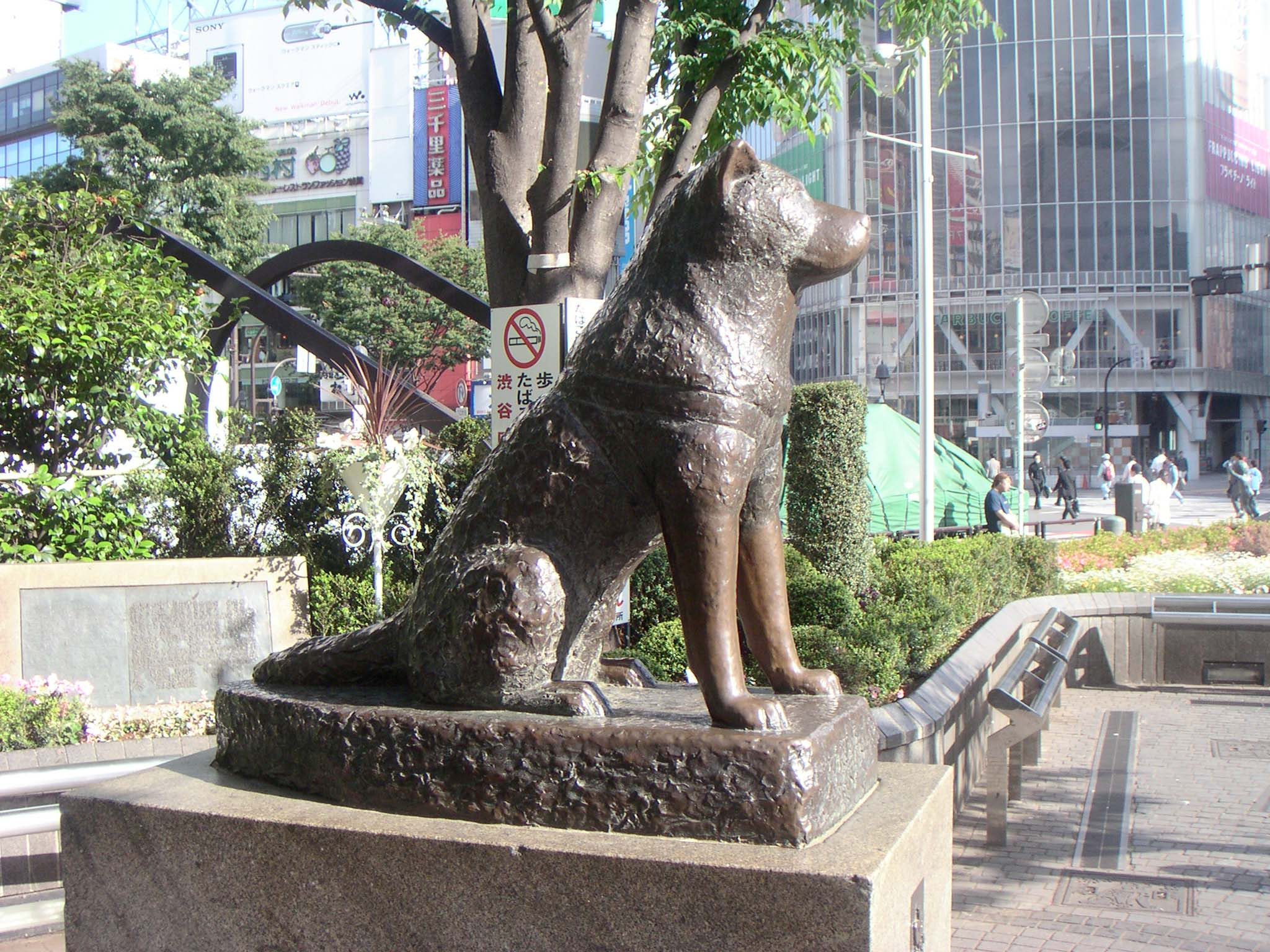 hachiko-statue-themost-loyal-dog-in-world