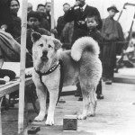 hachiko-waiting-in-rail-staion-for-his-master.