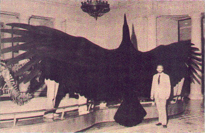 Argentavis-Magnificens-largest-flying-bird